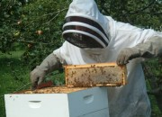 Doing some beekeeping